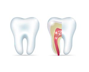 A diagram of a tooth root | Gaithersburg Root Canals